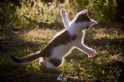 HUBER Media | Katzenspaß