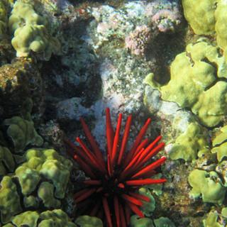 coral-1418180.jpg