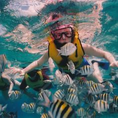 reef-snorkeling-377390.jpg