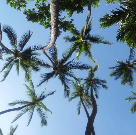 palm-trees-729569.jpg