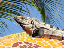 #6 wildlife you might see in Mexican Riv