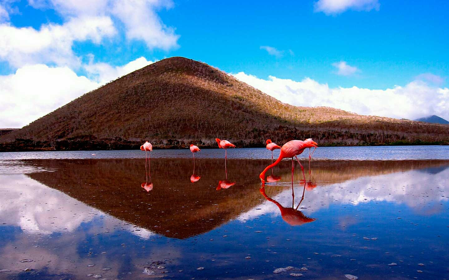 The-Galapagos-Islands-Floreana-Island-Co