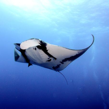 Extraordinary Experiences Beyond the Aquarium