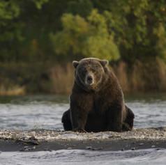 bear-2095379_resize.jpg