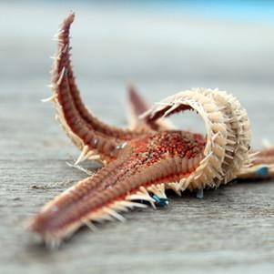 starfish-2305028.jpg