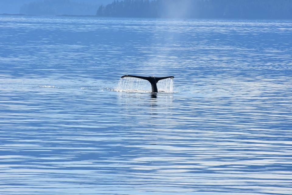 3 Whale Tail
