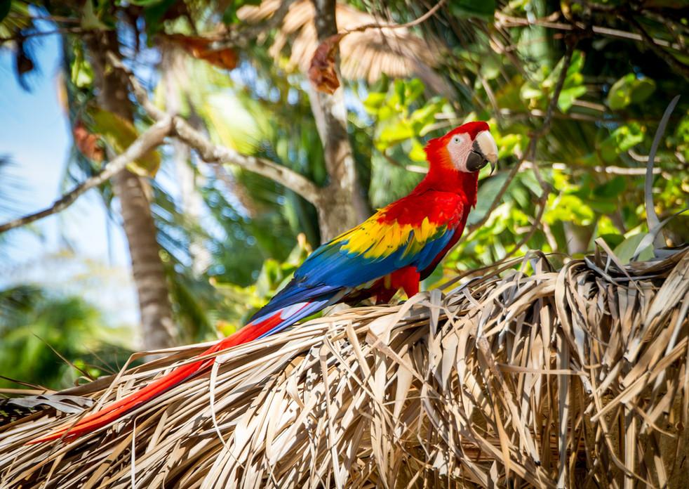 #9 beautiful birds of costa rica fun fac