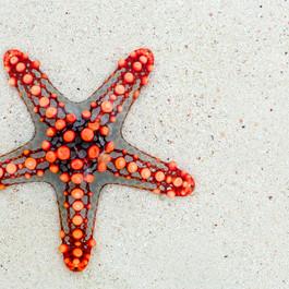 starfish-74535_1280.jpg