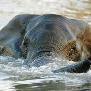 Elephant-in-water.jpg