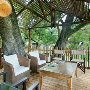 Tree-in-deck-.jpg
