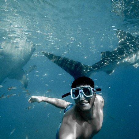 7 Spots to See Whale Sharks