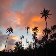 coconut-tree-466474_resize.jpg
