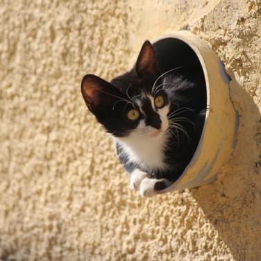 37 Drain cat
