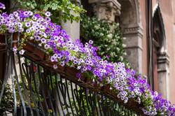 violet-floral-pot-on-balcony-venice-italy_Sv6AwgO3ze