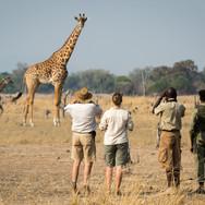 nsefu_camp_giraffe.jpg
