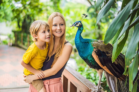 Mother and child looking at a peacock