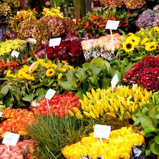 flower-market-in-amsterdam_zyWK8B5O.jpg