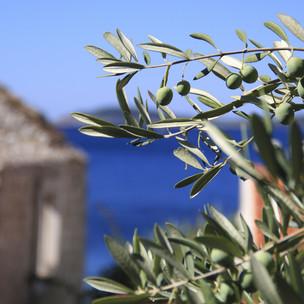 olives-1788247 (1).jpg