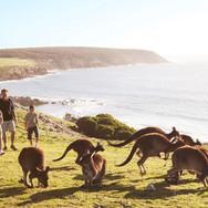 D217-hero-australia-kangaroos-on-ki-family-dh-enhance-2000x837.jpg