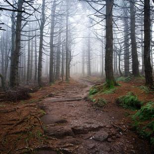 Bäume & Wälder