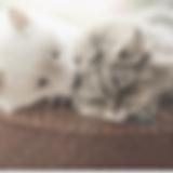 Screen Shot 2020-05-20 at 9.56.21 PM.png
