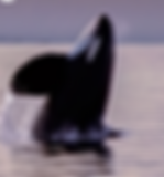 Screen Shot 2020-05-20 at 10.03.59 PM.pn