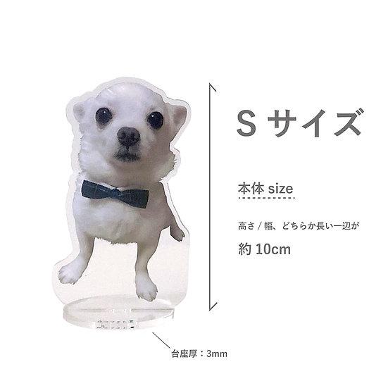 立つフォト(PET)S