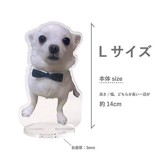 立つフォト(PET)L