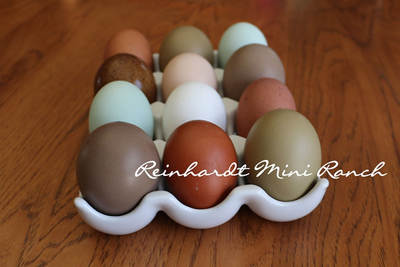 Rainbow Collection Hatching Eggs