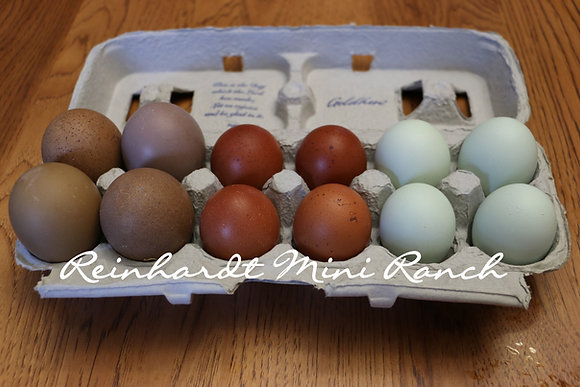 Color Collection Hatching Eggs