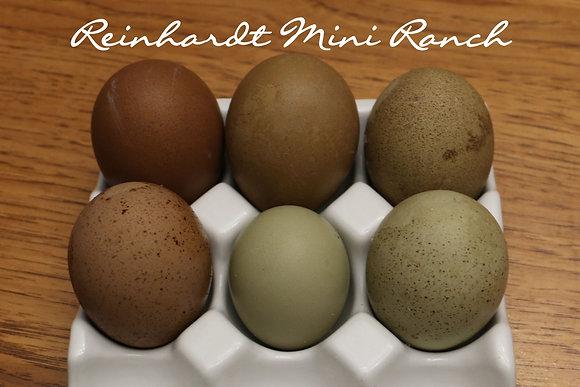 Olive Egger Variety Dozen Hatching Eggs