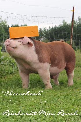 """Cheesehead"" Semen (Single Dose)"