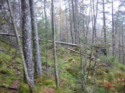 Skogseidterrenget1