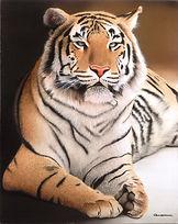 GASPAR Tigre de Ojos Verdes 90 x 70 1-50.jpg