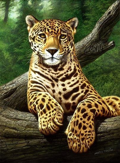 """TANOIRA, AMADOR """"Jaguar"""""""