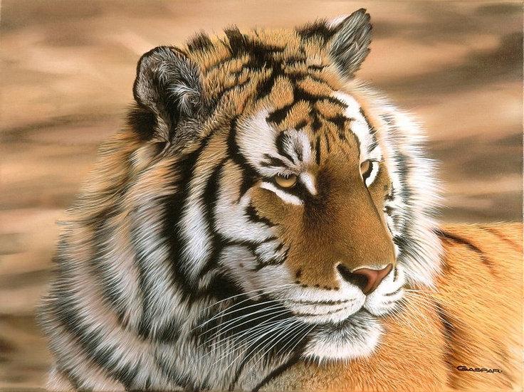 "GASPAR, SERGIO ""Cabeza de tigre"""