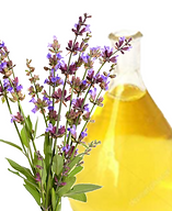 Clary Sage.png