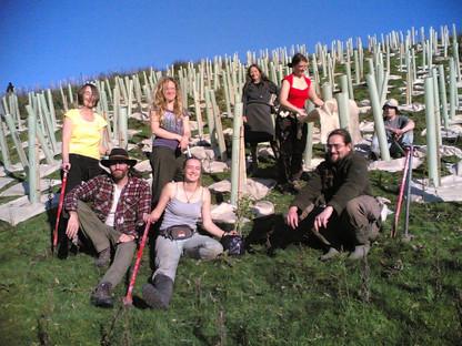 2010 treeplanting - 800 trees