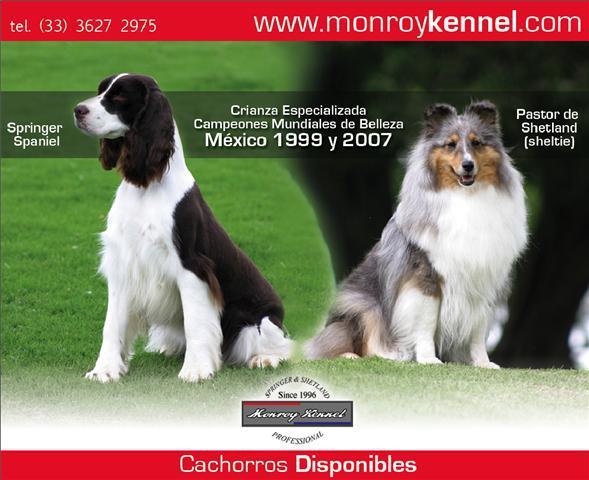 Criadero MonroyKennel Publicidad