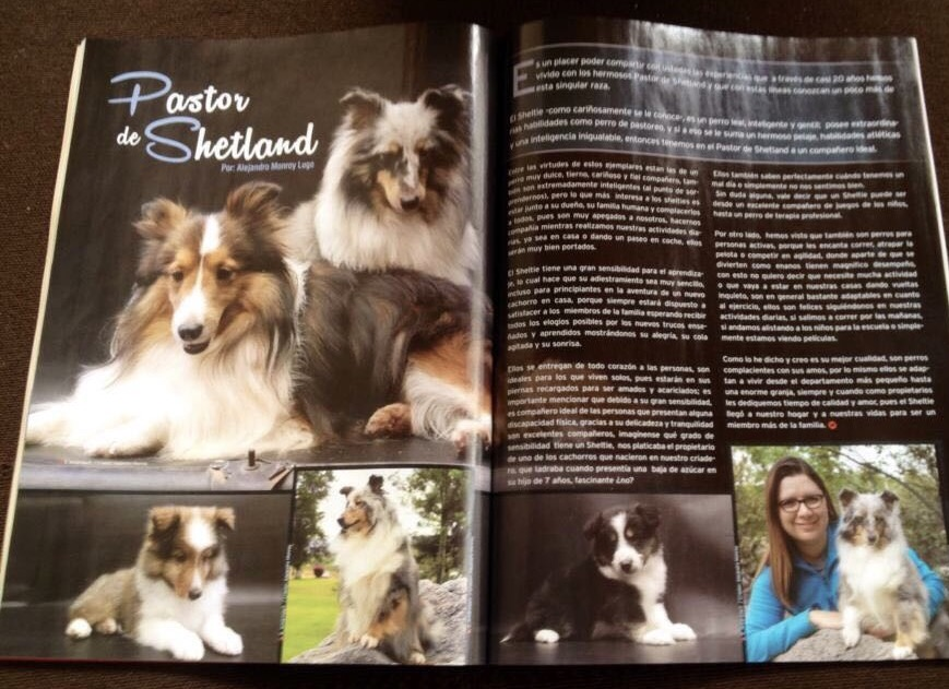 Revista Shelties