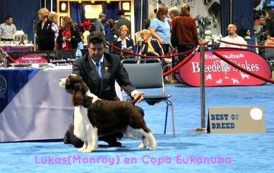 Lukas(Monroy) copa+eukanuba