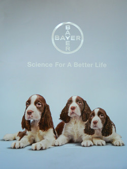 Contra portada Calendario Bayer