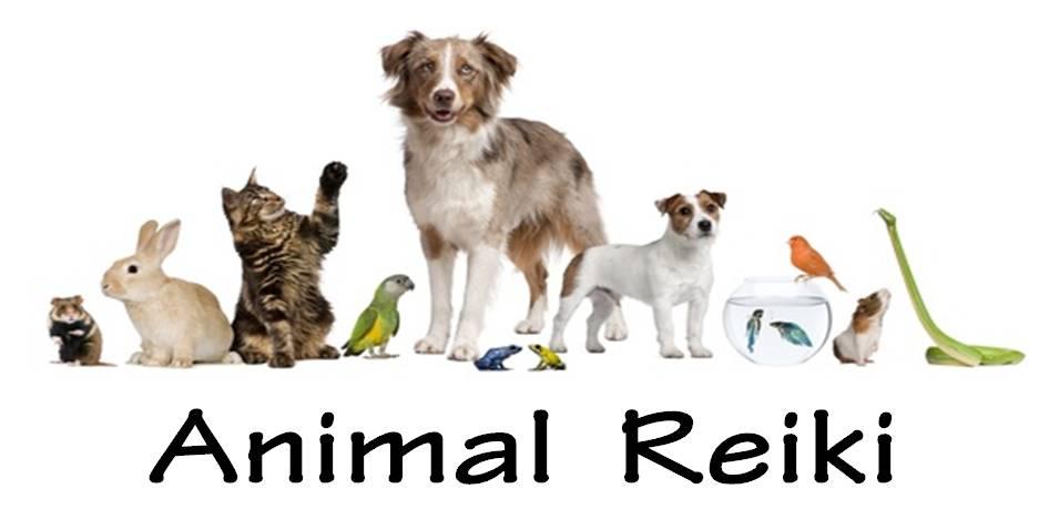 animal reiki logo