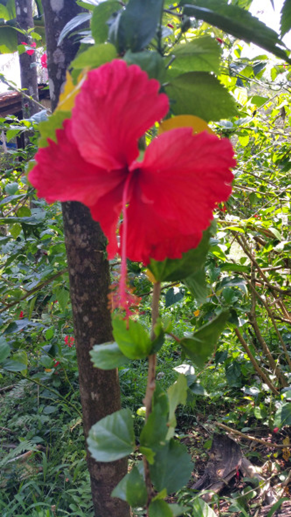 Hibiscus was everywhere!