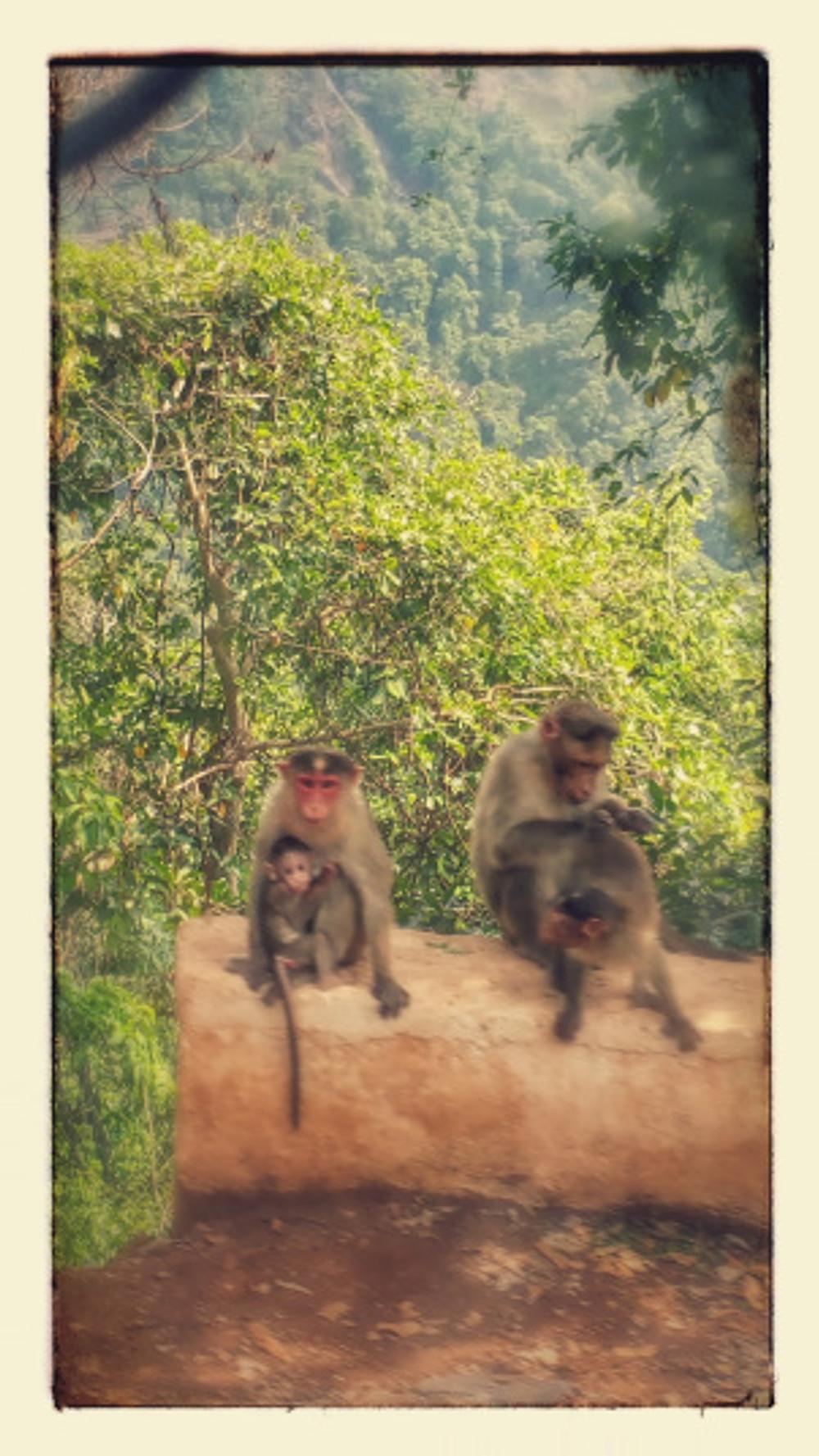 Monkey family - so cute!