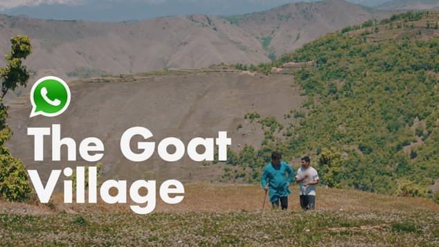 Whatsapp Business | The Goat Village
