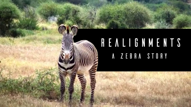 The Grevy's zebra is the largest wild equid in the world, but its behavior and migration patterns in Kenya reduce its chance of survival.