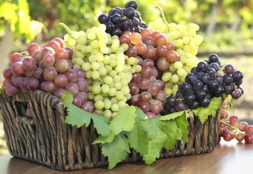 Een schaaltje druiven tijdens meetings zijn geen overbodige luxe!