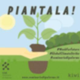 PIANTALA 2.jpg