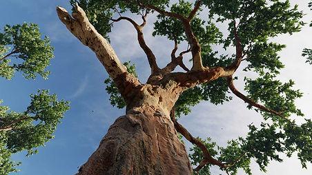 Eucaliptus-02-1536x864_Lumion10.jpg